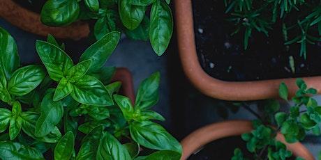 Holmesglen Rec - How To Grow Your Own Herb Garden tickets