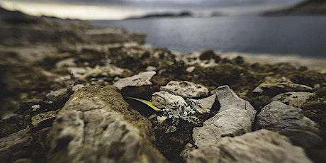 Les habitats littoraux des Calanques et leurs trésors billets