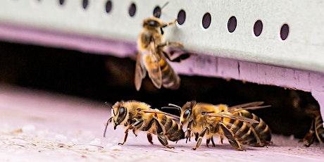 La fête du miel et de l'écoquartier [Ouvert à tous] billets