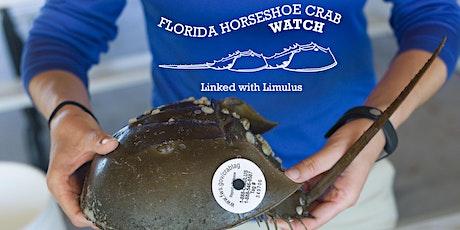 Florida Horseshoe Crab Watch Virtual Training and Workshop Fall 2020 tickets