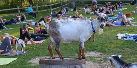 Goat Yoga at The Saratoga Winery tickets