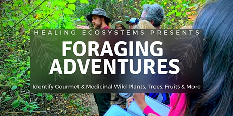 Foraging Adventures: Edible Plant Allies & Beyond tickets