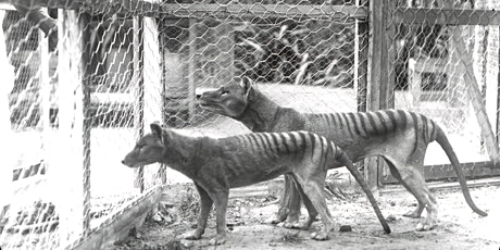 Mid-Afternoon Masterclass: Cloning the Thylacine tickets