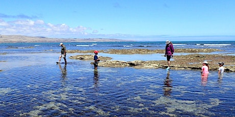 Aldinga Reef Ramble - Guided Tour tickets