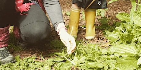 Herbal & Foraging Workshop - Week Two, Wonderful Weeds tickets