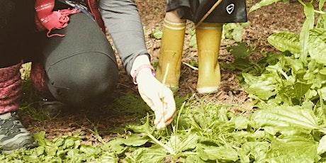 Herbal & Foraging Workshop - Week Three, Marvelous Mints - Online tickets