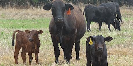 Herd Health Seminar tickets