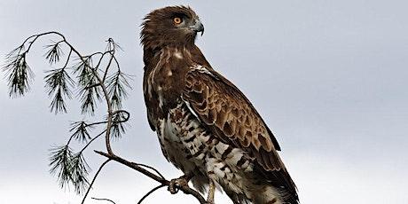 J'ai RDV avec la Biodiversité : aujourd'hui, les oiseaux billets