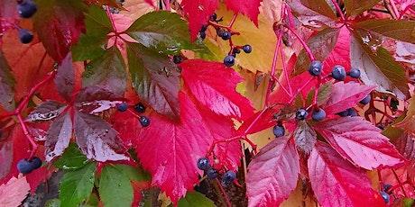 Des couleurs et des plantes billets
