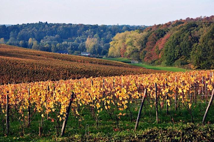 Image pour Visite du Vignoble et du Chai du  Château de Bousval