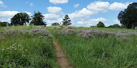Birding Walk at Hilltop Reservation - with Carole Hughes tickets