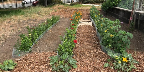 Sat 9/19 Volunteer Build Day and Seedlings Drive tickets