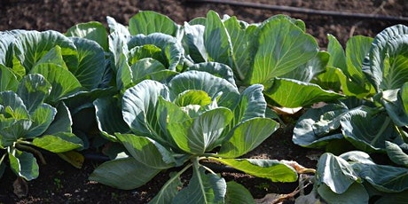 Fall Vegetables and Cover Crops tickets