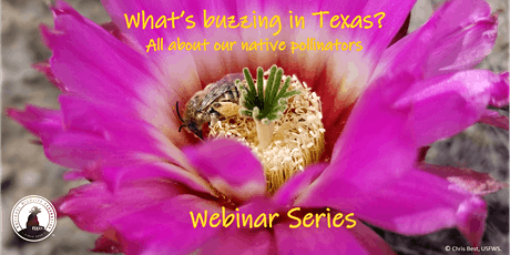 August Webinar: Native Bees of Texas tickets