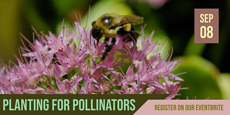 Blue Thumb Webinar: Planting for Pollinators tickets