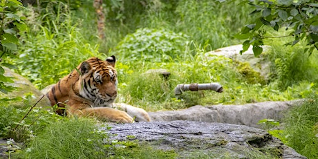 Alaska Zoo Admissions: August 5, 10:00am-5:00pm tickets