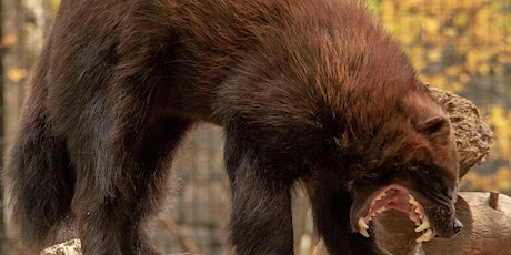Alaska Zoo Admissions: August 6, 10:00am-5:00pm tickets