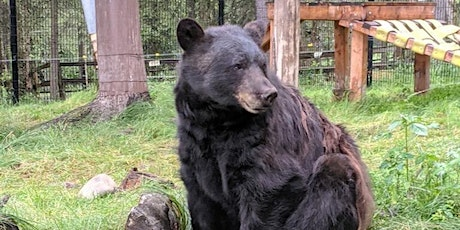 Alaska Zoo Admissions: August 7, 10:00am-8:00pm tickets