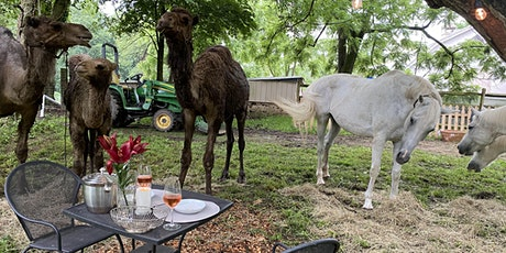 PYO BYO Basket Picnic Farm Experience with Camels, White Horses, Pig tickets