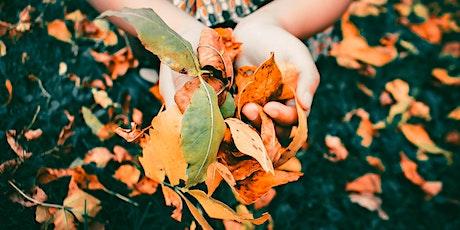 Autumn Half-Day Online Mindfulness Retreat, September 2020 tickets