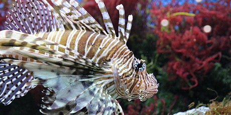 Deep Dive: All About Lionfish! tickets