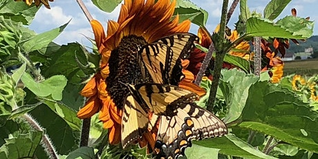 Photography Session: 2020  Southern Maryland Sunflower September tickets