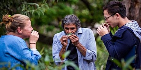 Aboriginal  Cultural Landscape Walking Tour of Brisbane CBD tickets