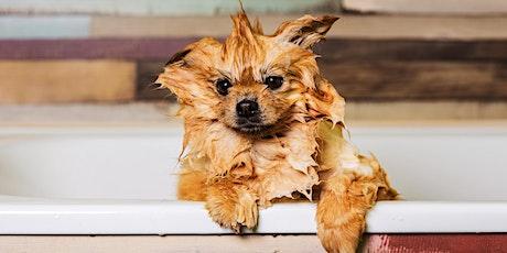 Webinar Sophia Spires: Basic verzorging huid en vacht hond tickets