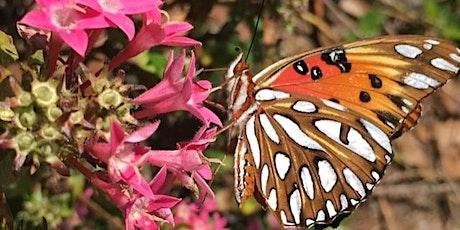 Pollinator Power Home School Zoom class tickets