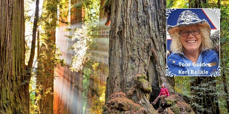 Discover the Redwoods of California: From Big Sur to Humboldt County tickets