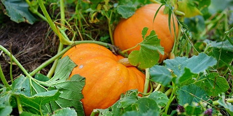 Pumpkin Planting & Goodie Bag Pickup @ Golden R Farms tickets