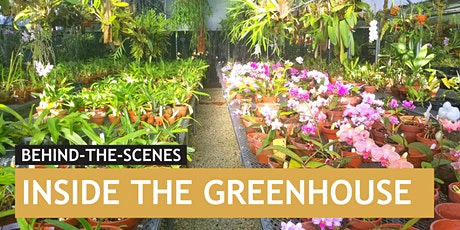 Inside the Greenhouse | Vizcaya Behind-the-Scenes tickets