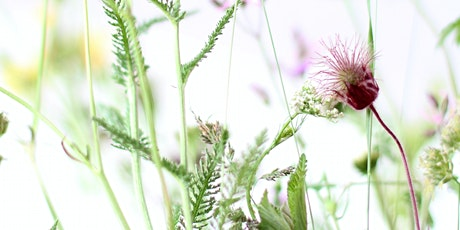 Discover Herbal Medicine - Fireside Talk And Tea Tasting tickets