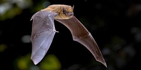 Fieldfare Bat Safari - from Kings Worthy tickets