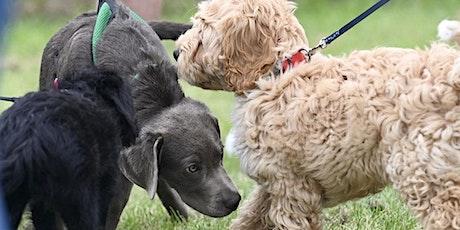 Puppy Socialisation Workshop - 2 Weeks tickets