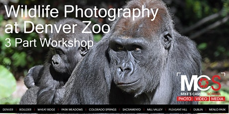 Wildlife Photography at  Denver Zoo - with Virtual Seminar / Gallery tickets