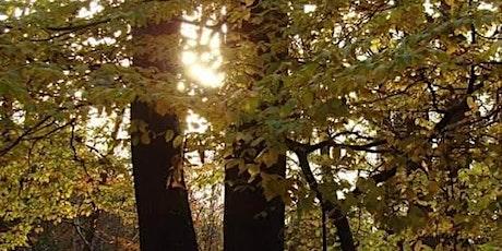 Satsang en forêt normande billets