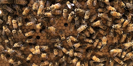 Beginning Beekeeping: Bees in Winter and Preparing to Beekeep Next Year tickets