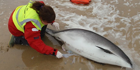 Marine Strandings Network Seminar 2020 tickets