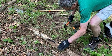 Trail Maintenance & Invasive Removal at Ward Pound Ridge Reservation tickets
