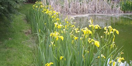 Yellow Flag Iris Control Workshop tickets