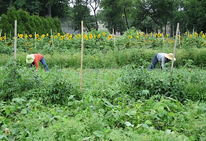 Queens Farm Volunteer Day Registration image