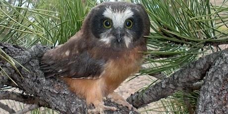 Northern Colorado Owls tickets