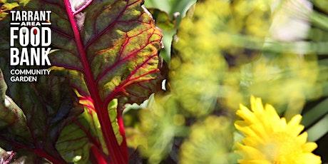 Virtual Garden Workshop - Intensive Companion Planting tickets