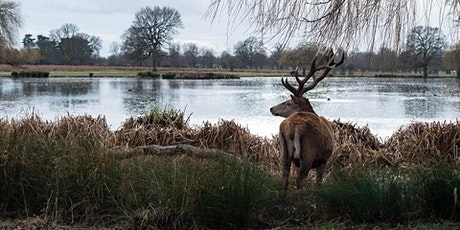 Beginner Walkers!! Hampton Court Circular walk tickets