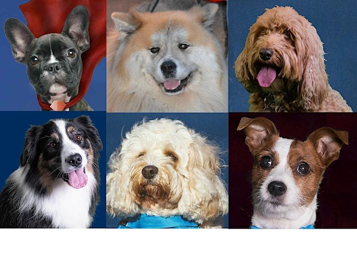 Virtual Glo-Walkies  on behalf of Guide Dogs image