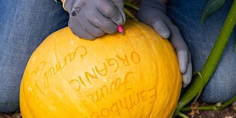 Adults Only Pumpkin Scratching tickets