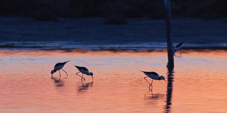 Waterbirds: Migratory and permanent residents webinar tickets