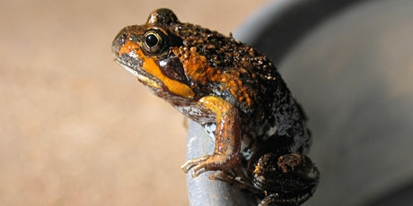 Attracting Frogs to Your Garden tickets