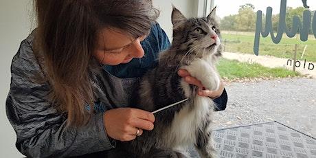 Lezing: Een klitvrije kat, zo doe je dat! tickets